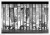 The Books 15/365 (John Penberthy LRPS) Tags: 15jan18 365the2018edition 3652018 d750 day15365 johnpenberthy nikon books bookshelf
