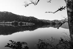 Lake Ocoee, Tennessee. August, 2017. (Guillermo Esteves) Tags: lakeocoee cherokeenationalforest landscape blackandwhite fujifilmxt2 fujifilm tennessee unitedstates polkcounty reliance us