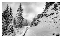 Ricksecker Point Road (rich trinter photos) Tags: mountrainier winter ashford washington unitedstates us landscape rickseckerpointroad snow storm trinterphotos blackandwhite monochrome