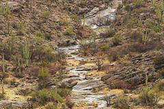 DSC_0020 saguaro east during storm 850 (guine) Tags: saguaronationalpark saguaro cactus plants rocks water waterfall