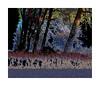 Imaginary landscapes biesbosch februari 2018 (3) (cees van gastel) Tags: ceesvangastel canoneos40d tamron70300mm natuur nature landscape landschap edited trees bomen fantasie bewerkt biesbosch noordbrabant