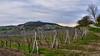Castle Sirotčí and vineyards (Szymon Simon Karkowski) Tags: outdoor vines vineyerads grass sky clouds road landscape tree orphan castle sirotčí hrádek klentnice moravia czech republic nikon d5100