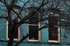 the blue of bricks (annapolis_rose) Tags: vancouver gastown carrallstreet brickbuilding bluebrick windows tree treebranches