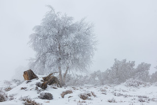 Winter am Schliffkopf
