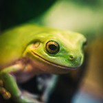 Peace Frog thumbnail