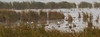 Dixon_JB_475-detail_3988 (Joanne Bouknight) Tags: dixonwaterfowlrefuge greategret illinois mist morning observationtower rain storm thewetlandsinstitute