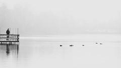 ducks (Darek Drapala) Tags: duck warsaw warszawa water winter white panasonic poland polska park skaryszewski lumix light nature bw blackwhite blackandwhite noiretblanc