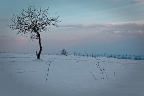 Hundsheimer Berg im Winter
