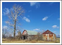 Abandoned Barns and the Skeleton Tree (sjb4photos) Tags: michigan washtenawcounty milanmichigan sycamore farm abandonedbarns ruraldecay