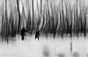 """Marcher dans l'inconnu ... ( P-A) Tags: marais marécage forêtinondéeboiséneige hiver skisdfond raquettes marche balade activité sports mystérieuse photos simpa© """"nikonflickraward"""""""