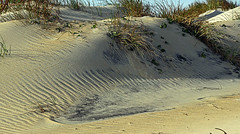 ripples in time (scott1346) Tags: sand wind motion beauty beauifuldestination dunes grass plants erosion colors tan white green bluegreen 1001nights canont3i thegalaxy