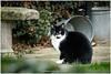 Boromir (Hetwie) Tags: vijver cat kater brouwhuis kanaal wijkpark boromir kat helmond noordbrabant nederland nl