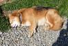 "To 60-003 (photozaki) Tags: ""dogs cats"" dog dogs inu cat cats neko shikoku japan ohenro88 ohenro pilgrimage"