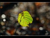 blatt (amdolu) Tags: blatt grün gegenlicht bokeh norderstedt stadtpark
