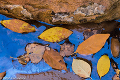 Floating On Blue Water (Ralph Earlandson) Tags: narrows zion utah leavesonwater oil zioncanyon leaves zionnationalpark desert coloradoplateau