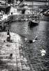 Dive (d.portnoy) Tags: porto portugal river boat bathing dive jump