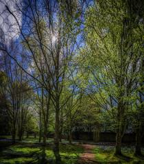 Kilkenny Grounds (Martin Smith - Having the Time of my Life) Tags: kilkenny kilkennygrounds ireland panorama pano 3shotpano martinsmith ©martinsmith nikond750 nikkor2485mmf3545gedvr bluebells grass sunburst countykilkenny ie bench