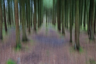 Tree Hallucination  7DWF  Free