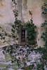 Nobel (Maria Eschini) Tags: nobel signa toscana tuscany italia italy abandoned abbandonato fabbrica esplosivi 2018 sony rudere muro wall rampicante