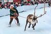 reindeer_race_DSC0256 (Patrik Öhman) Tags: reindeer ren winter snow race indigenous fotosöndag fs180204 solo fotosondag