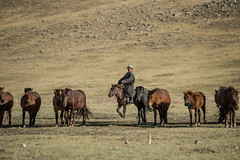 41660-012: Water Point and Extension Station Establishment for Poor Herding Families in Mongolia (Asian Development Bank) Tags: mongolia mng uvurkhangai 41660 41660012 mongolian man herder cattle livestock cows horses animals laboranimals farmanimals herd herdingactivities trade livelihood rural province