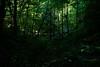 Just Green (ETt_) Tags: greem forest plants leaves sunlight shadows dark horror scary