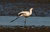 Practising for ice dancing? Olympics today! (Maureen Pierre) Tags: royalspoonbill dancing leg stretch wildlife humour light estuary bird