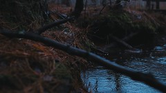 Rainy Stream (scottcook_) Tags: nature stream woods forest rain branch tree dusk moody