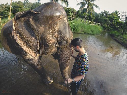 The Elephant Bond