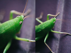 a friend (lisaleaembry) Tags: bugs insects friend hello bug macro macrophotography 60mm canon