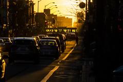 Sunset along Bloor (jer1961) Tags: toronto bloorstreet streetcar bathurststreetcar ttc 511streetcar bikelane bloorbikelane cyclist traffic