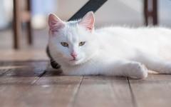 Katty (06) (Vlado Ferenčić) Tags: catsdogs cats vladimirferencic vladoferencic animals animalplanet zagorje hrvatskozagorje hrvatska croatia nikond90 tamron9028