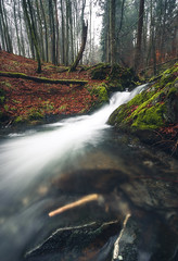 Winterstream (Kevin Kistermann) Tags: winter stream bach national park nationalpark geographic germany deutschland eifel wasser wasserfall water waterfall outdoor grün green brown fog nebel