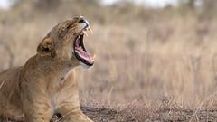Nairobi-Nationalpark-9830 (ovg2012) Tags: kenia kenya nairobi nairobinationalpark
