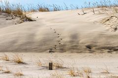 Beach tracks (JMFusco) Tags: newjerseyshore newjersey beach landscape islandbeachstatepark nature