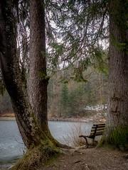 am Hechtsee (Ina Hain) Tags: winter landscape landschaft olympus bäume steine ufer mountain outdoor wandern alpen rundweg nature natur spaziergang bank lake see kufstein hechtsee