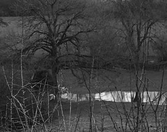 2 - Débordement... (melina1965) Tags: 2018 janvier january bourgogne saôneetloire saintvallier burgondy nikon coolpix s3700 hiver winter arbre arbres tree trees campagne opencountry noiretblanc blackandwhite bw eau water