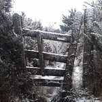 The Gate in Winter