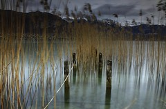 Vestige lacustre -  Lake remnant (paul.porral) Tags: water lake lac flickr pose poselongue longexposure paysage nature canon wasser landscape landschaft ngc waterscape
