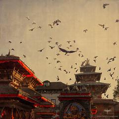 Asia / Nepal / Kathmandu / Durbar Square (Pablo A. Ferrari) Tags: pabloferrariart kathmandu nepal eagle durbar durbarsquare historicalplace architecture arquitectura birds flight hunter hunting birdofprey unesco worldheritage