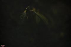 Awakening (MBates Foto) Tags: ambientlight availablelight color existinglight foliage green nikkorlens nikon nikond810 outdoors plants textures spokane washington unitedstates 99203