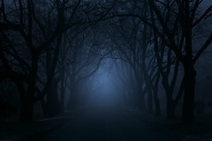 Whisper (bprice0715) Tags: spooky canon canoneos5dmarkiii canon5dmarkiii landscape landscapephotography nature naturephotography trees fog mist moody dark dismal mysterious mystical mystique haunting beautyinnature ethereal