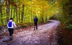 Per i boschi (SDB79) Tags: bosco sentiero pnalm val fondillo trekking escursione autunno foglie natura