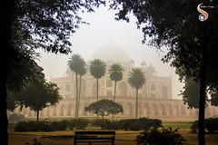 Nature's mausoleum (Shikher Singh) Tags: humayun'stomb tomb mausoleum mughal architecture heritage delhi emperor palmtrees trees greenery travel tourism worldheritage fog morning attraction shikhersimagery