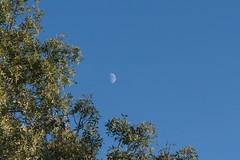 The Moon accompanies me wherever I go (P.J.C.R.) Tags: moon brightmoon belezadalua quartocrescente belezadanatureza beleza belo belocontraste natureza nature naturezalinda naturezabela naturezabonita naturaleza naturezaperfeita moonlight moonlighting lovely lovelymoon