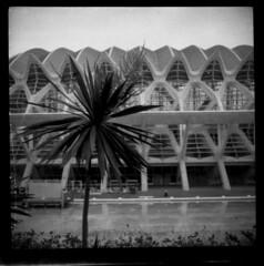 Palm + Calatrava