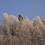 Waldspitzen thumbnail