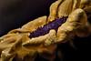 Sunflower (marcello.machelli) Tags: focusstaking nikon sigma nikond810 rail nicefoto sigma15apomacro28 sigma150apomacro28 yellow giallo girasole drps droplets gocce studio details detail dettaglio black nature flower fiore natura
