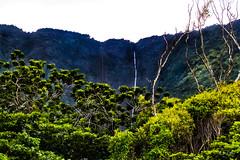 Hawaii-WaipioValley-21.jpg (Chris Finch Photography) Tags: jungle hawaiiphotography waipio taro water waipiovalley hawaii landscapephotographs cascades waterfalls landscapephotography cascade waterfall photographs chrisfinch wwwchrisfinchphotographycom chrisfinchphotography utahphotographer tarofarms bigisland tarofarm tropical valley