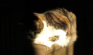 ... sunbath for Ellen